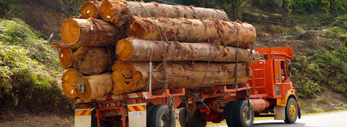 Malaysian logging truck