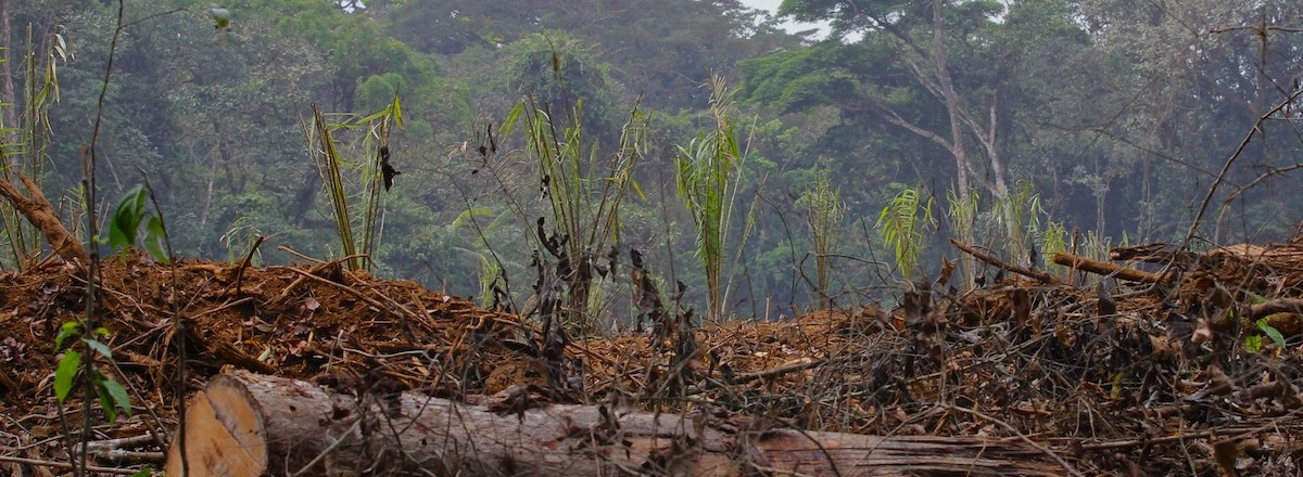 deforestation_caused_by_enlarging_palm_oil_plantations_0-e1445631245573