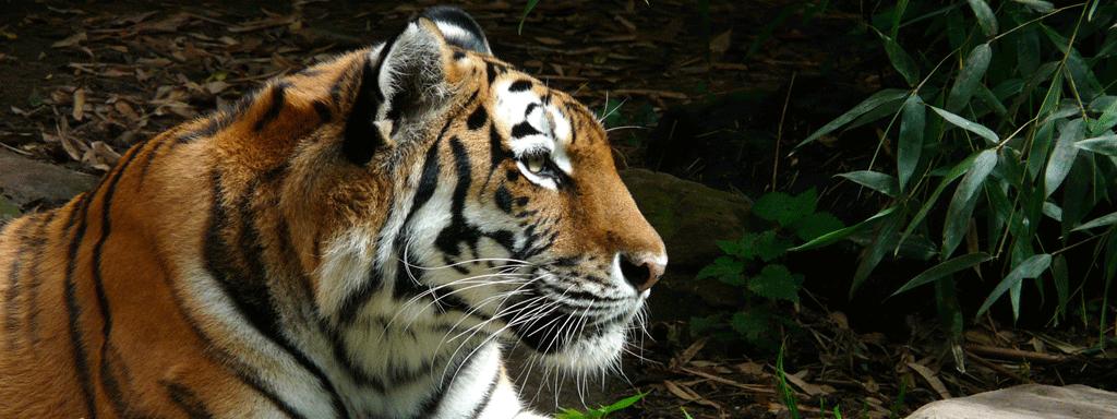 Malaysian Wildlife